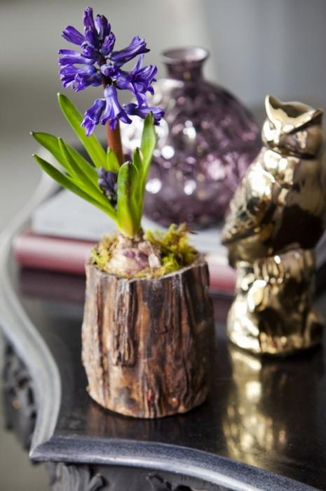 Луковичные цветы в интерьере. Подборка красивых фотографий (9) (465x700, 277Kb)