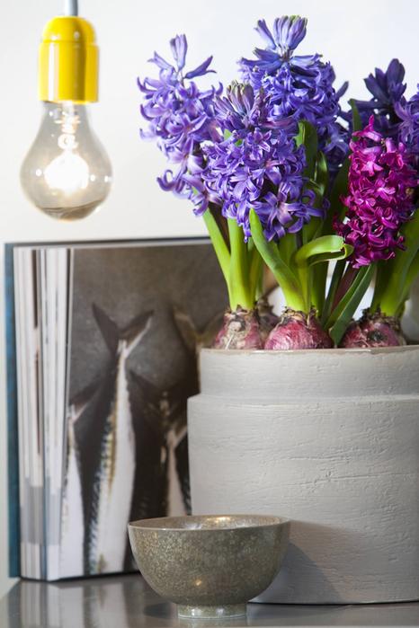 Луковичные цветы в интерьере. Подборка красивых фотографий (11) (466x700, 320Kb)
