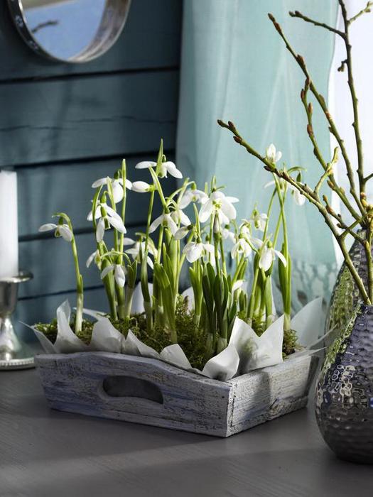 Луковичные цветы в интерьере. Подборка красивых фотографий (13) (525x700, 327Kb)