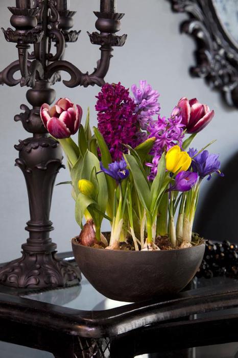 Луковичные цветы в интерьере. Подборка красивых фотографий (15) (466x700, 318Kb)