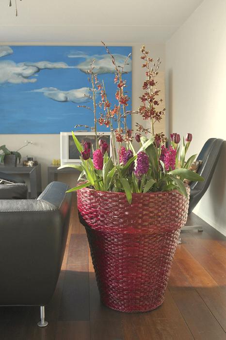 Луковичные цветы в интерьере. Подборка красивых фотографий (17) (466x700, 389Kb)