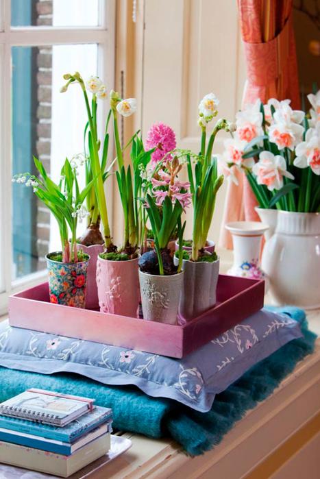 Луковичные цветы в интерьере. Подборка красивых фотографий (23) (467x700, 394Kb)