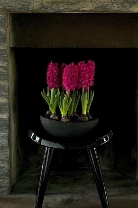 Луковичные цветы в интерьере. Подборка красивых фотографий (25) (465x700, 207Kb)
