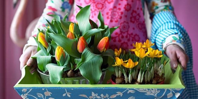 Луковичные цветы в интерьере. Подборка красивых фотографий (30) (650x325, 229Kb)