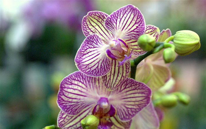 Flowers amp Their Colours  Orchids  Interflora