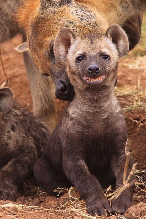 4744155-R3L8T8D-600-cute-smiling-animals-9 (466x700, 361Kb)