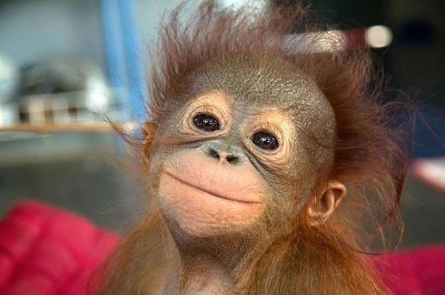 4745605-R3L8T8D-650-cute-smiling-animals-26 (650x432, 222Kb)