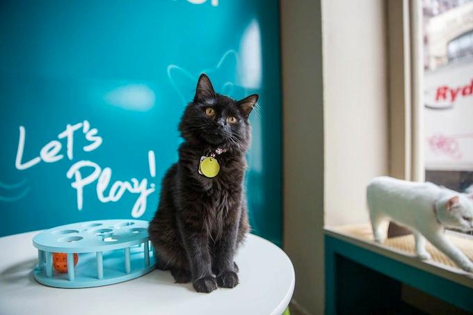 кошачье кафе нью-йорк фото 2 (680x453, 262Kb)