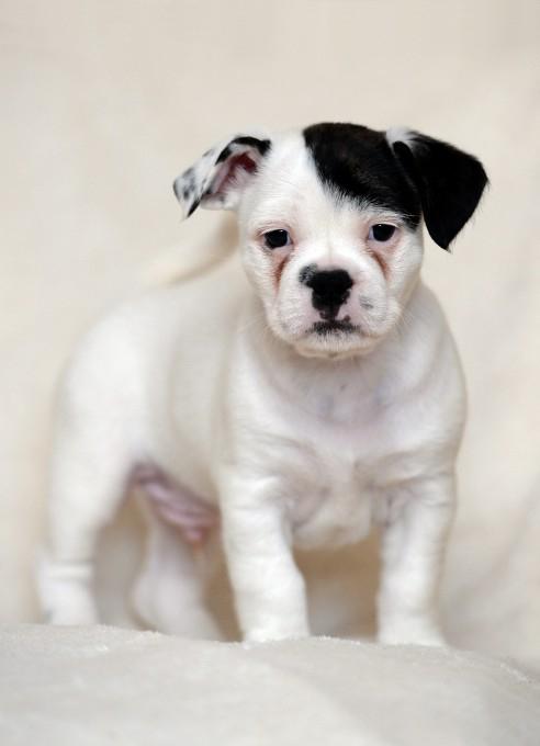 смешной щенок фото 1 (492x680, 133Kb)
