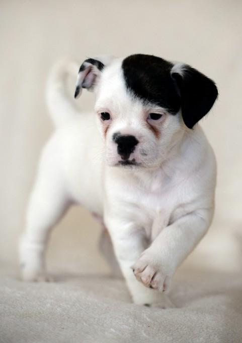 смешной щенок фото 3 (481x680, 133Kb)