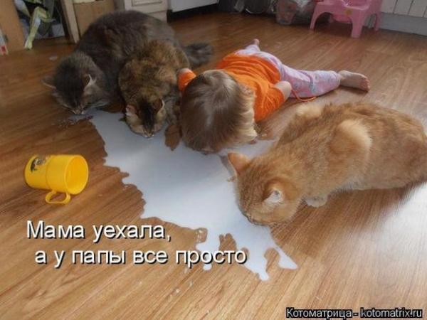 smeshnie_kartinki_139720241028 (600x450, 188Kb)