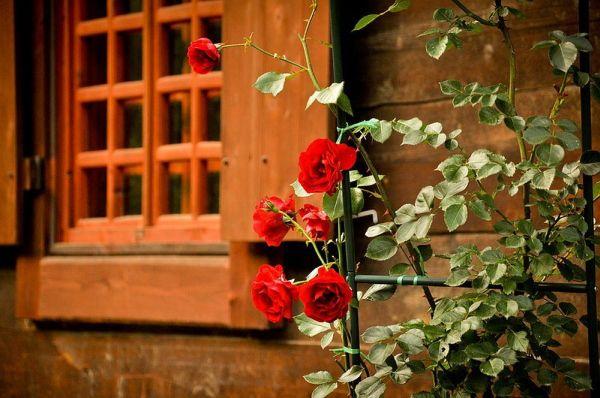 деревянный дом фото 6 (600x398, 268Kb)