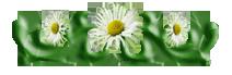74505308_74269284_ornament02_1 (212x69, 26Kb)