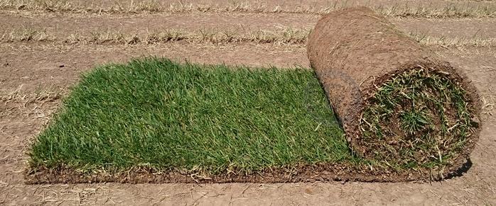 газон в рулонах 1 (700x291, 295Kb)