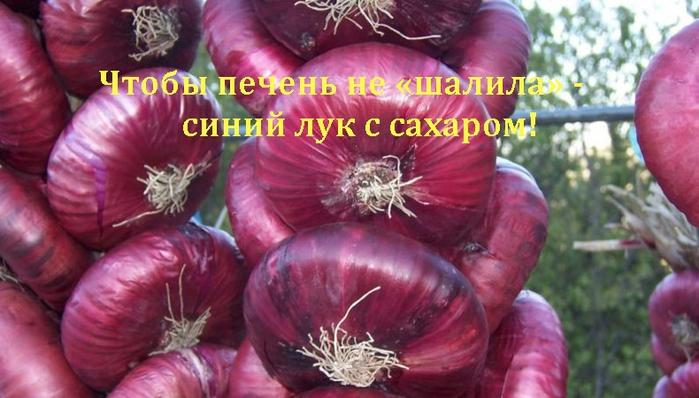 2835299_Chtobi_pechen_ne_shalila__sinii_lyk_s_saharom (700x398, 219Kb)
