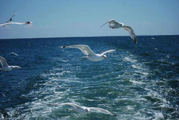море чайки (700x468, 239Kb)