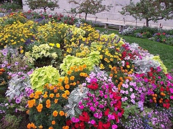 цветы (604x453, 142Kb)