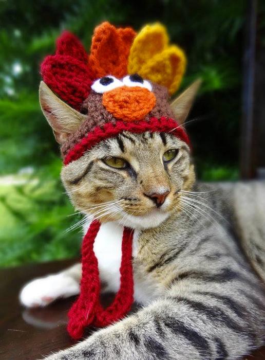 смешные кошки в шапочках 1 (516x700, 384Kb)