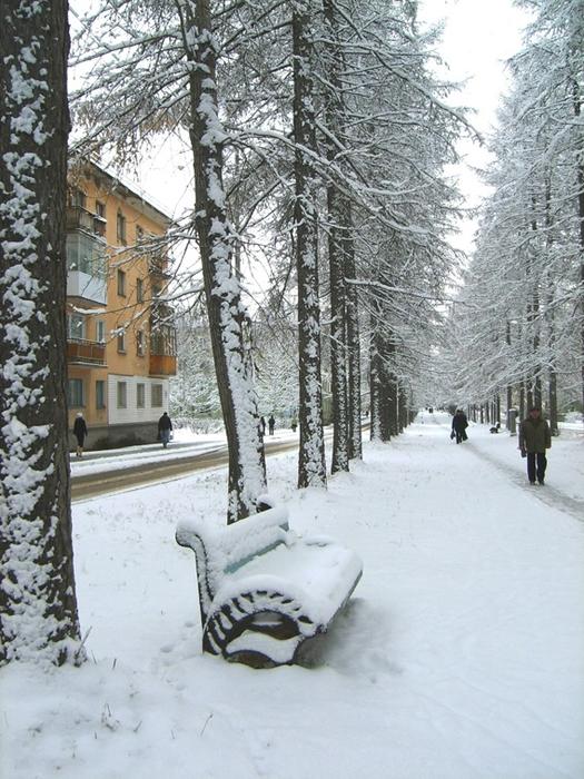 Лиственичная аллея в снегу (525x700, 326Kb)
