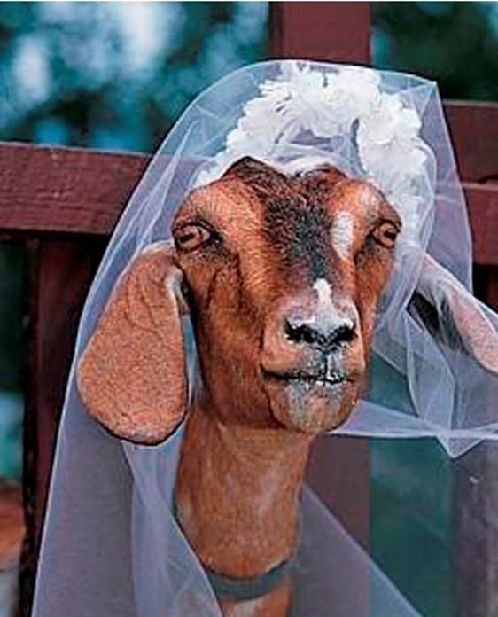 Для чего мужчина женился на собаке в Индии? Свадьбы людей и животных