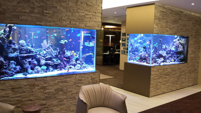 30-Fabulous-Fish-Tanks-I-Would-Be-Proud-To-Have-In-My-Home3 (700x393, 377Kb)