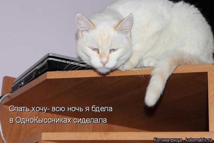 kotomatritsa_f (700x466, 219Kb)