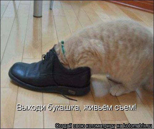 kotomatritsa_zI (500x420, 152Kb)