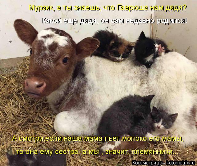 kotomatritsa_1 (640x539, 332Kb)