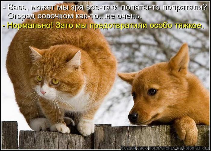 kotomatritsa_BA (700x499, 399Kb)