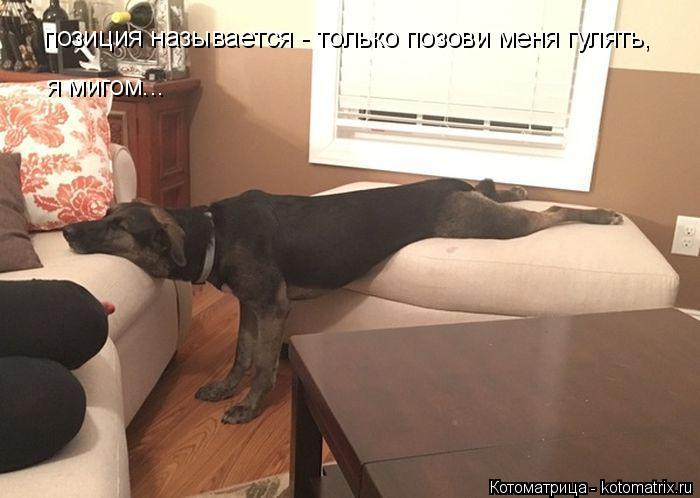 kotomatritsa_kL (700x498, 205Kb)