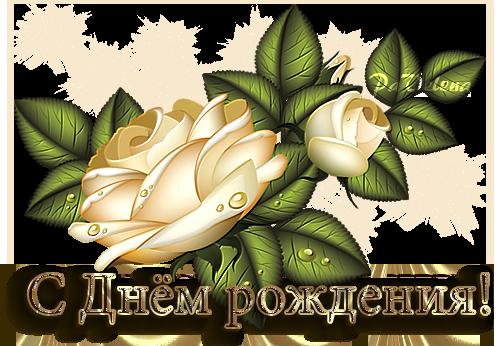 С днем рожд роза крем (500x346, 290Kb)