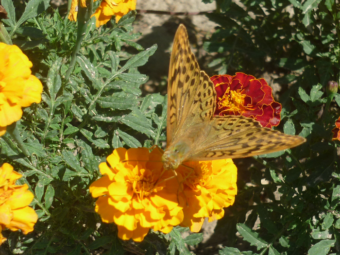 фото бабочка