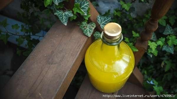 domashnee-limonchello (600x338, 88Kb)