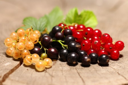 Currant-health-benefit2 (450x300, 118Kb)