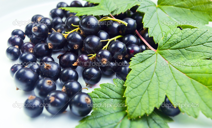 depositphotos_14055840-Black-currant (700x424, 365Kb)