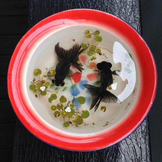 золотые рыбки Риюсуке Фукахори 10 (550x550, 262Kb)