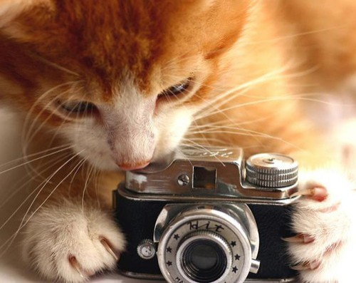 catwithcamera (500x397, 48Kb)