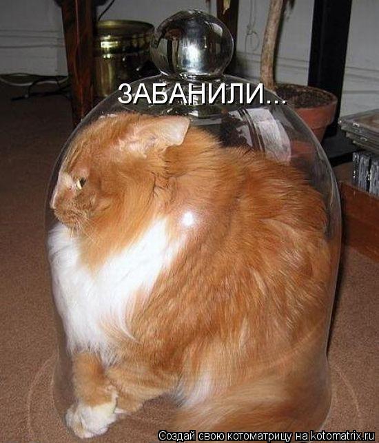 kotomatritsa_6 (550x643, 252Kb)
