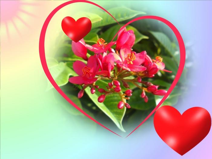 Holidays___Saint_Valentines_Day_Velikolepnyye_tsvety_057030_ (700x525, 207Kb)