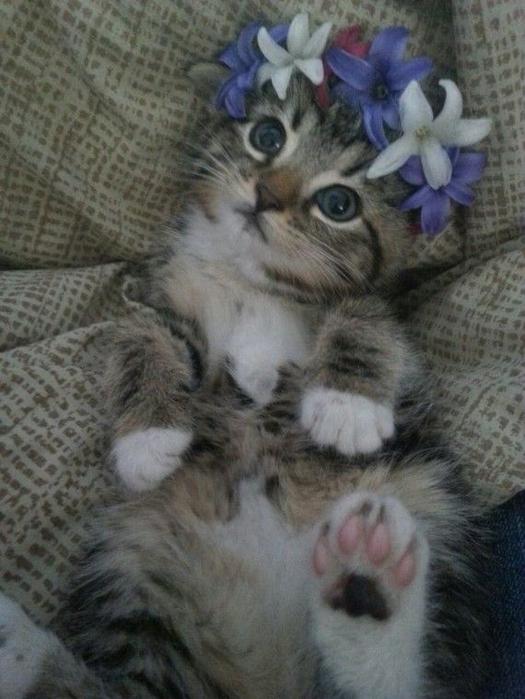 alt=кошки и цветы1а (525x700, 326Kb)