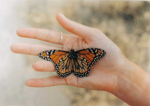 Beautiful colorful butterfly pictures