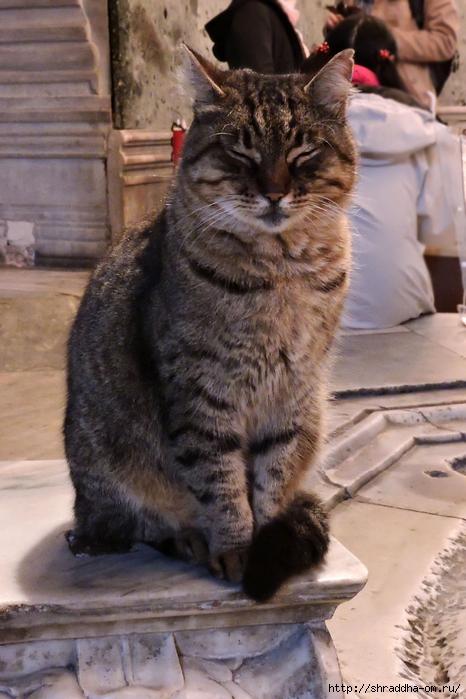 Котик (1) (466x700, 265Kb)