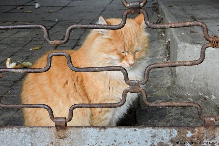 Котик (3) (700x466, 312Kb)