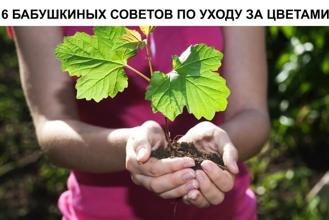 image (1) (640x429, 65Kb)