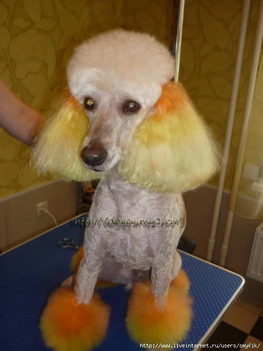doggy.my1.ru����� (525x700, 205Kb)