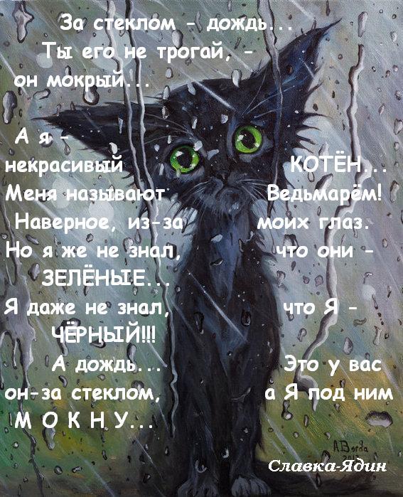 дождик-котик (567x699, 400Kb)