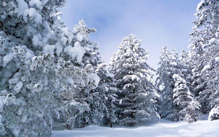 761265__snowy-forest_p (700x437, 409Kb)
