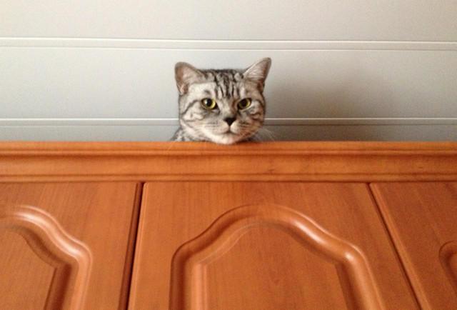 Коты на шкафу фото