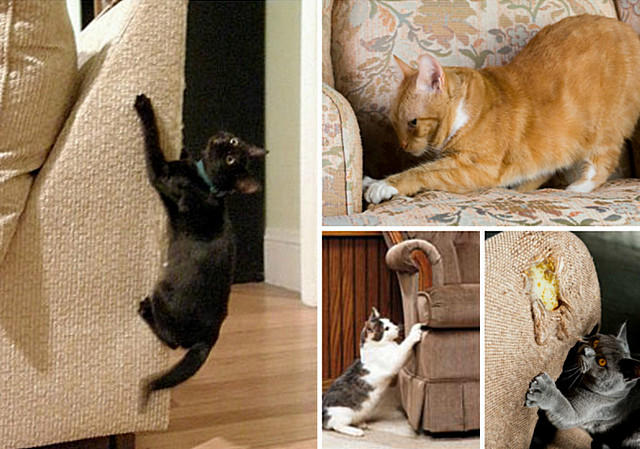 Как кота отучить царапать диван