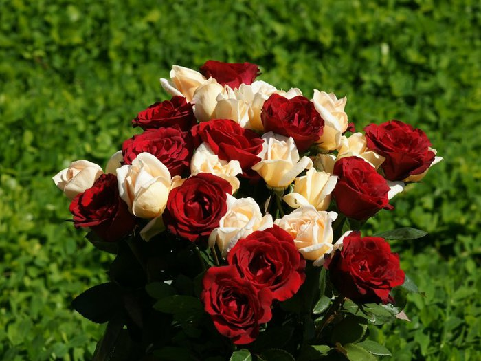 A-bundle-of-red-and-white-roses-wallpaper (700x525, 78Kb)